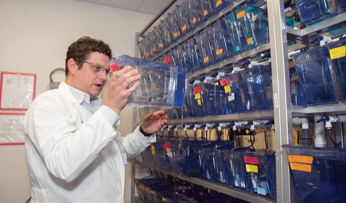 Dr. Sidi with zebrafish in a lab